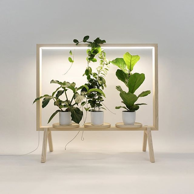The moderate wooden casing holds up to three pruned plants with implicit lighting to enable them to develop and be sound. It additionally serves as a room divider with the plants including an unobtrusive measure of security. Notwithstanding bringing new greenery into an exhausting office space, these plant-filled floor screens add to a more beneficial air quality for everybody to relax.
