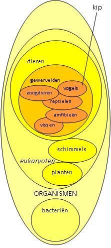 In de veelheid aan soorten zit orde. Biologen orden soorten op overeenkomsten. Die overeenkomsten zijn geen toeval, ze komen door hun verre verwantschap.