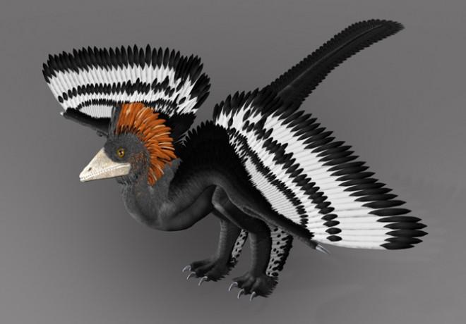 Deze dinosauriër ( Anchiornis huxleyi ) ter grootte van een kalkoen, leefde ergens tussen 151 en 161 miljoen jaar geleden. Het is het oudste dier met veren, voor zover bekend. De kleuren in de reconstructie zijn afgeleid uit de pigmentzakjes in de fossiele veren. (Zie  hier voor meer fossielen.)