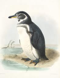 De Galapagos pinguïn (Spheniscus mendiculus) komt uitsluitend op de eilandengroep voor. De archipel ligt op de evenaar, waarmee de pinguïnsoort de meest noordelijke van de wereld is.