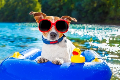 The Dog Days of Summer blaze on so grab a cold drink and - read the news...