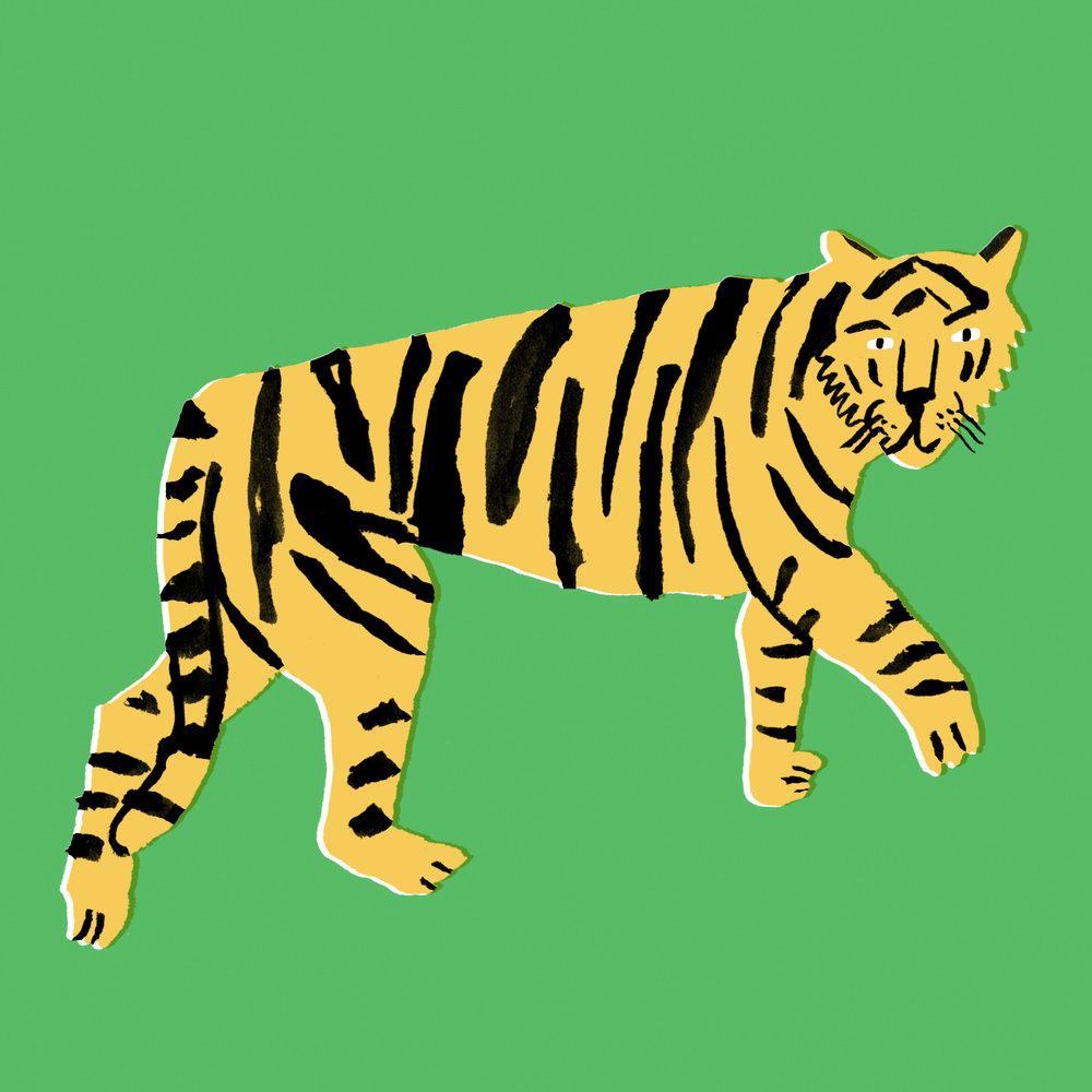 tiger man.jpg