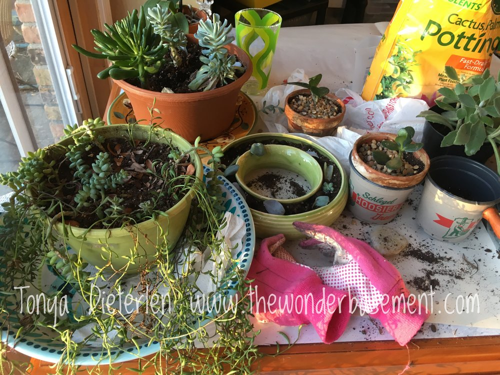 the WonderBasement Succulents