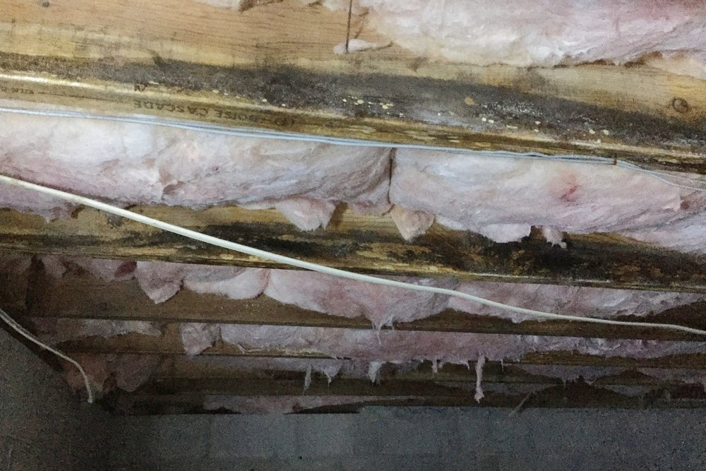 This was the worst part of my crawl space. Lots of old mold staIns visible. Underfloor insulation ratty and fallen or hanging down in some places.