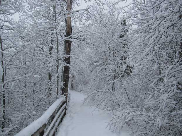 Oberholzer Trail in Winter