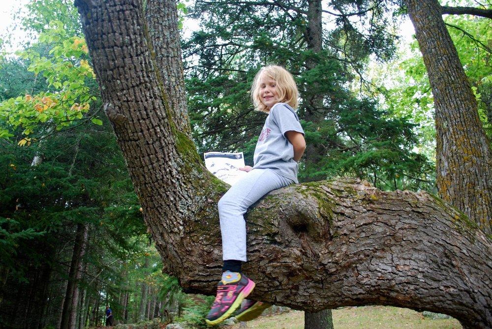 vnpa photo kid in tree.jpg
