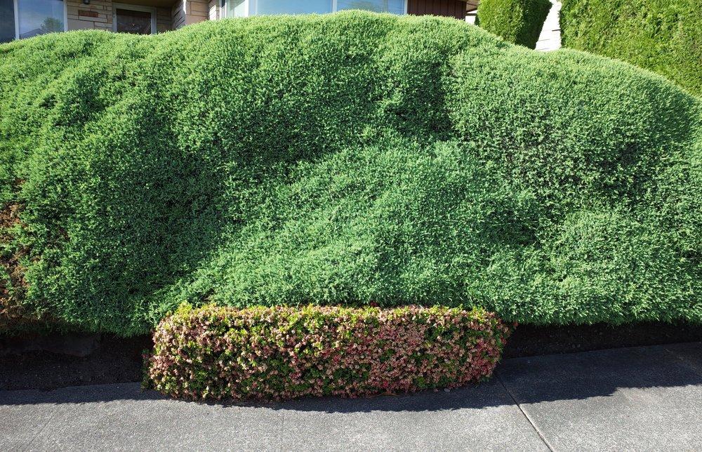 shrub1.jpg