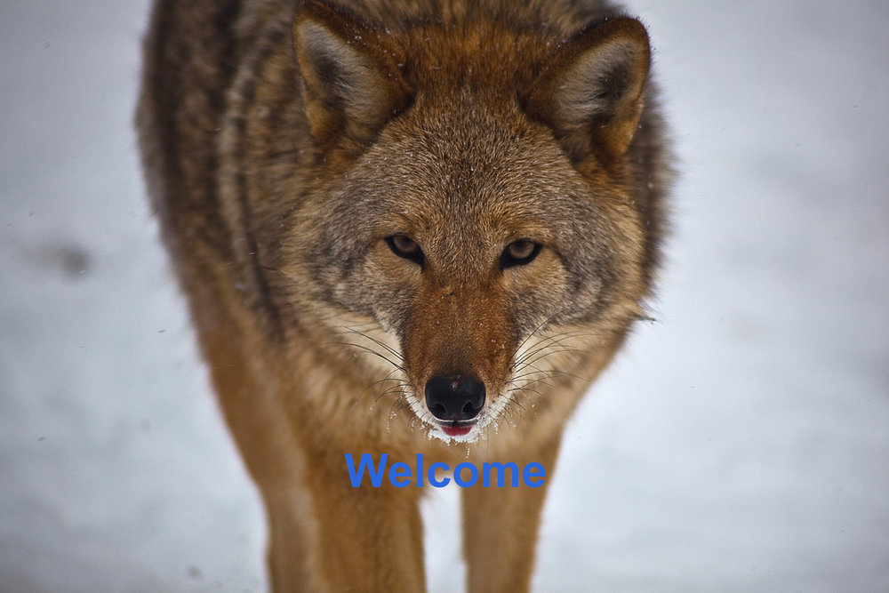 Coyote_Welcome_Test_2.jpg