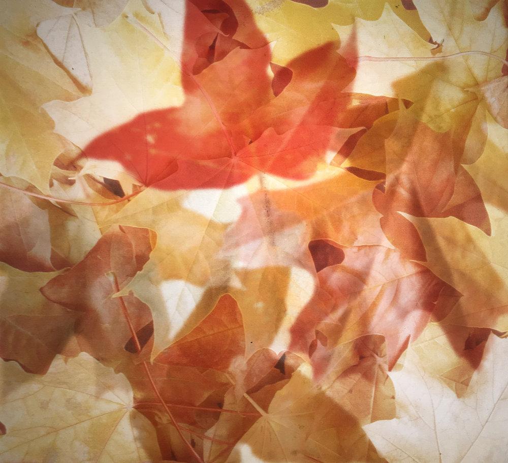 veriglass leaves.jpg