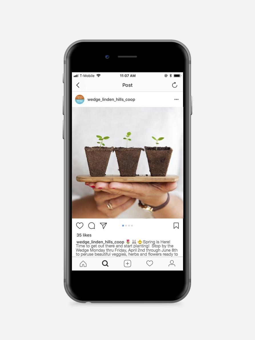 Instagram Post Wedge Plant Sale.jpg