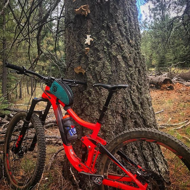 From oyster mushroom hunting to monsoon cloud darting, the Giant Trance really does it all . . . #flagstaff #mtb #gianttrance #roguepandadesigns