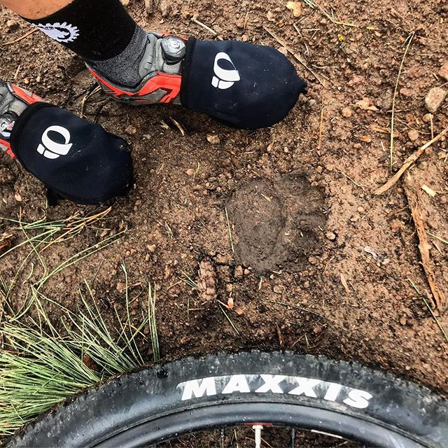 Cute little 🐻prints all over West Elden. Poor guy is probably trying to hide from the scary mountain bikers, which must be tough when there is a thinning operation happening on your home turf #mtblife