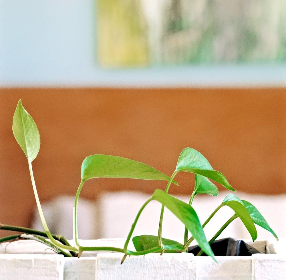 apt2plant.jpg