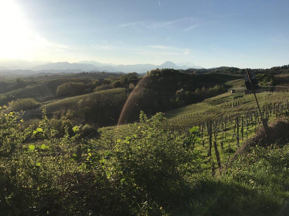 Gattinara vineyards.jpg