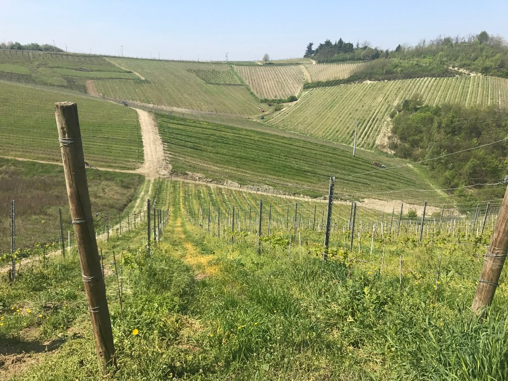 Vignetti Massa - vineyards.jpg