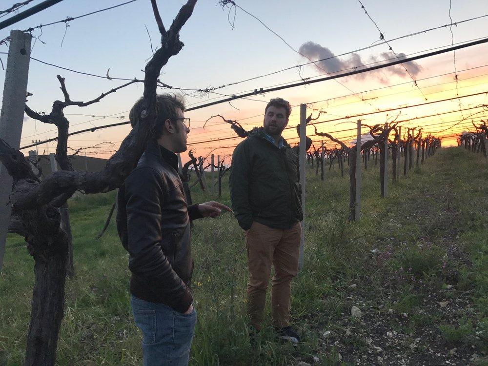 Guccione - Oscar in the vineyard.jpg