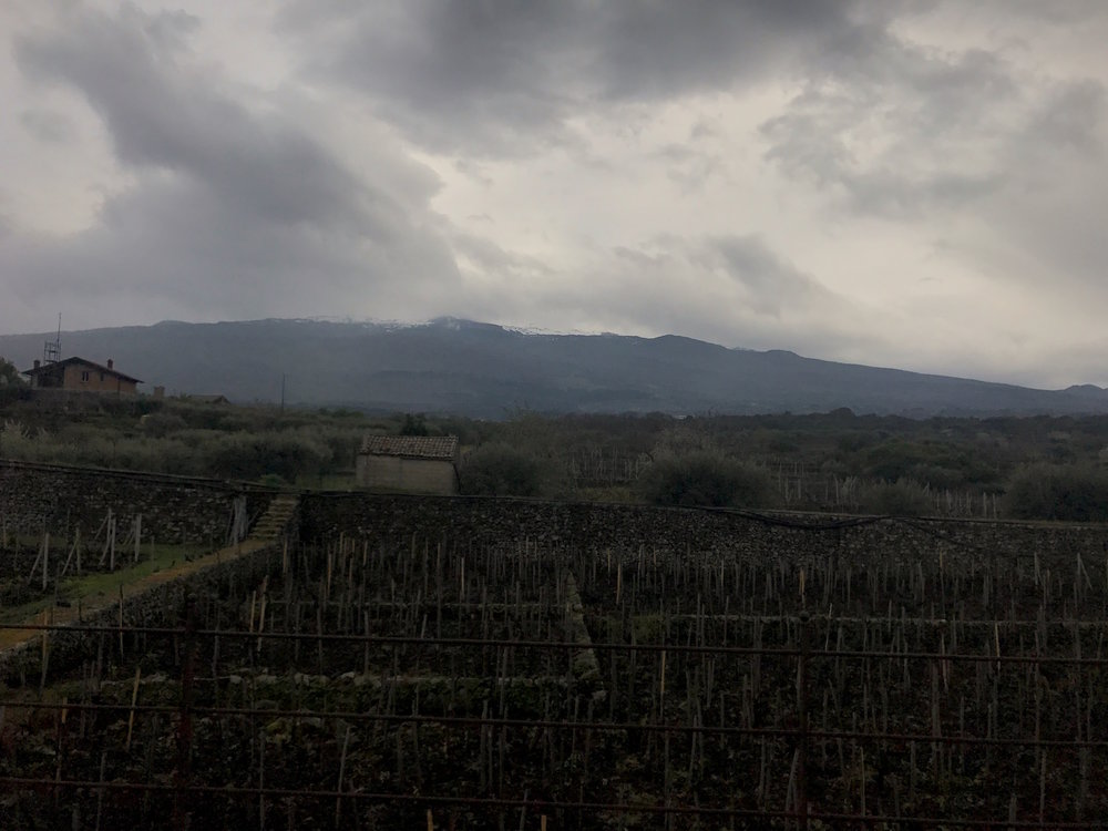 I Custodi - vineyards with walls and Etna in the background.jpg