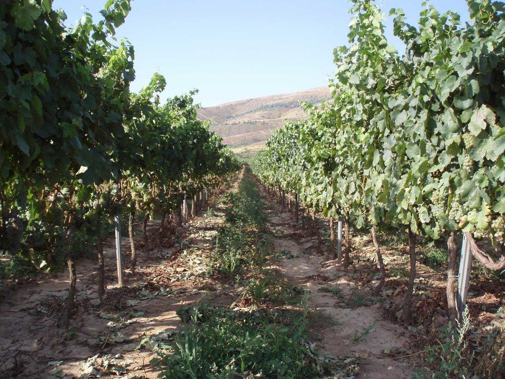 Vino-Benaza-Godello-1.jpg