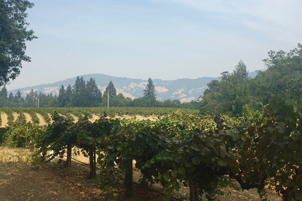Vines_Hawkeye-Ranch-Pinot-Block.jpg