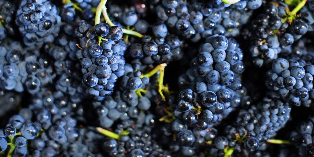 Wines_Purple-Grapes.jpg