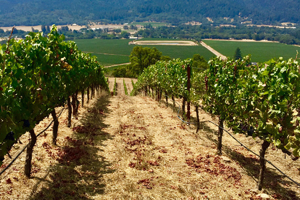 Vines_Cerise-Vineyard.jpg