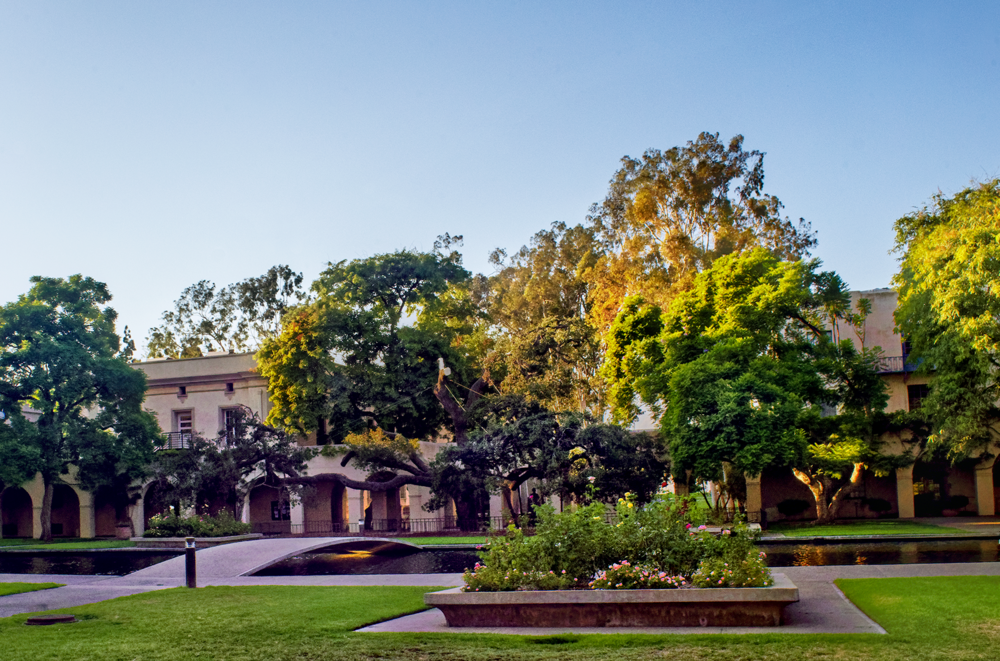 Before the End: Caltech's 400-year-old Engelmann oak—a well-known campus landmark treasured by generations of students, faculty, and staff, and pictured here in better days—has been officially declared dead. Photo: Karl Klein