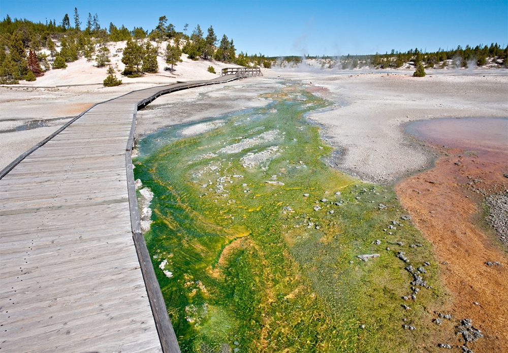 Oxphotobacteria in microbial mats in Yellowstone. Photo courtesy Fischer Laboratory/Caltech