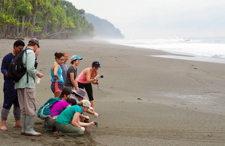 In Costa Rica, students take pictures of baby green sea turtles making their way to the ocean.  Photo/Chong Sun