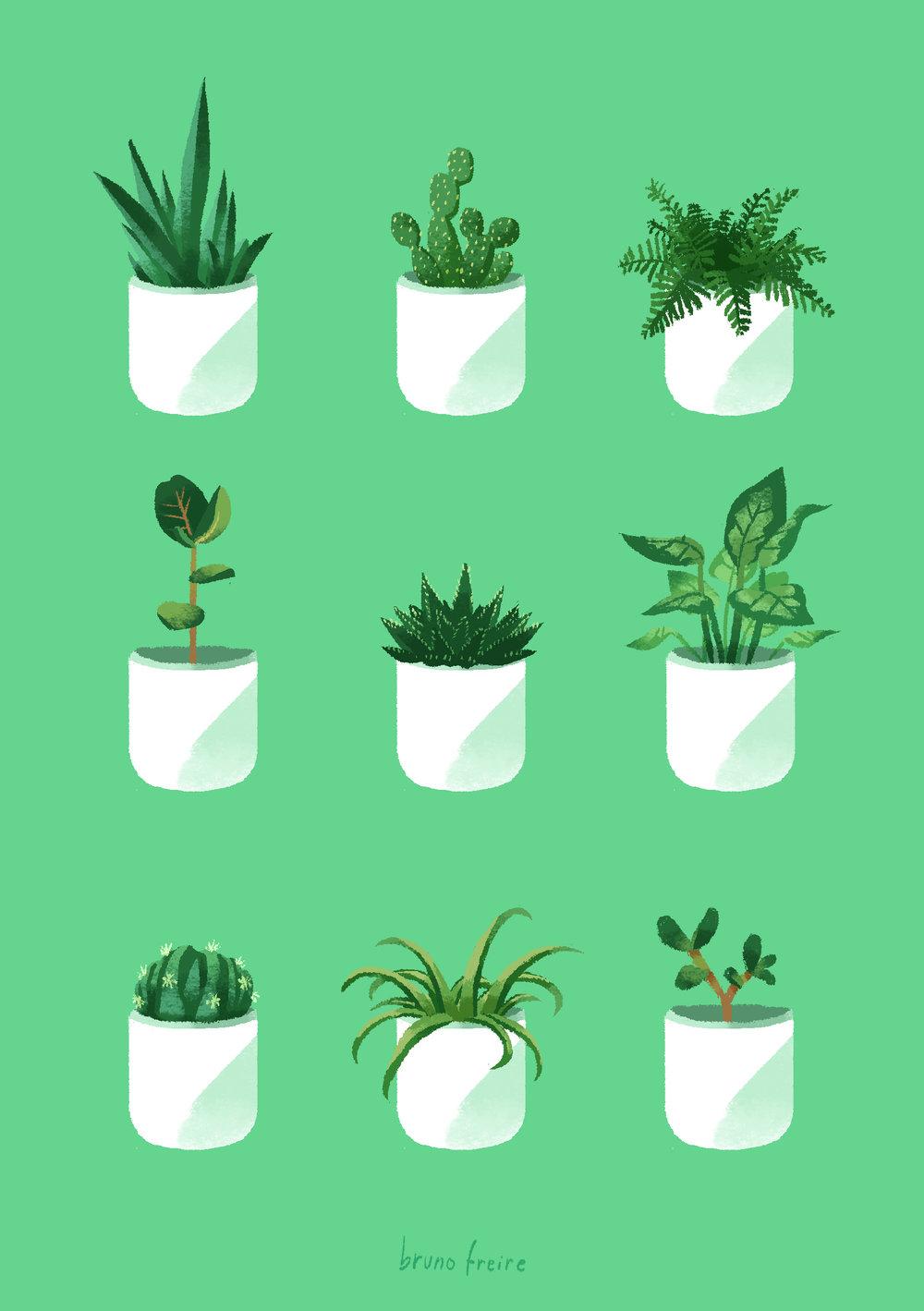 Plantas de mesa