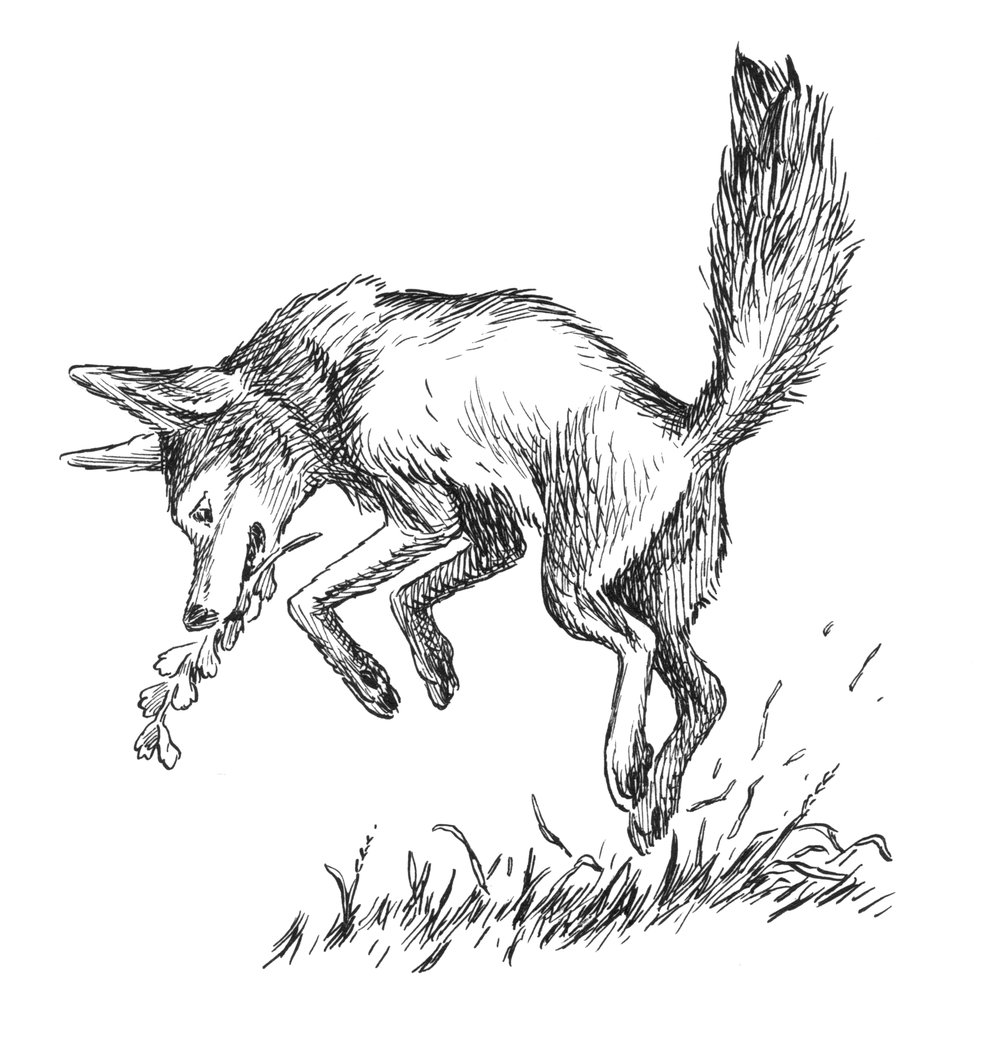 Coyote Spot 1.jpg