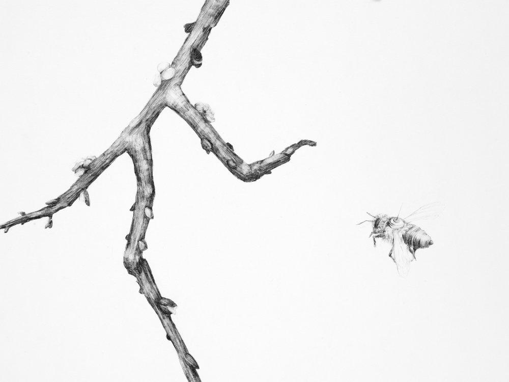 The New Pollinators (detail)