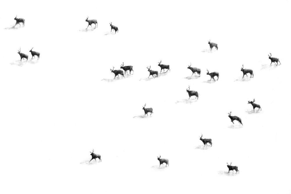 Herd (detail)