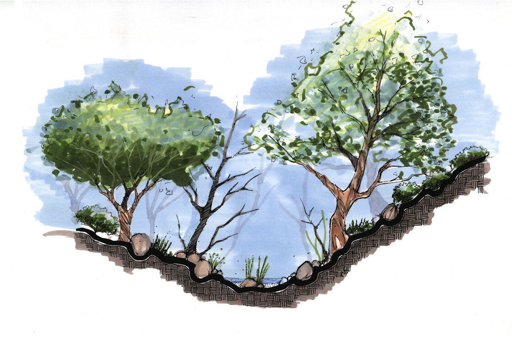Restoration of Ripian Woodlands