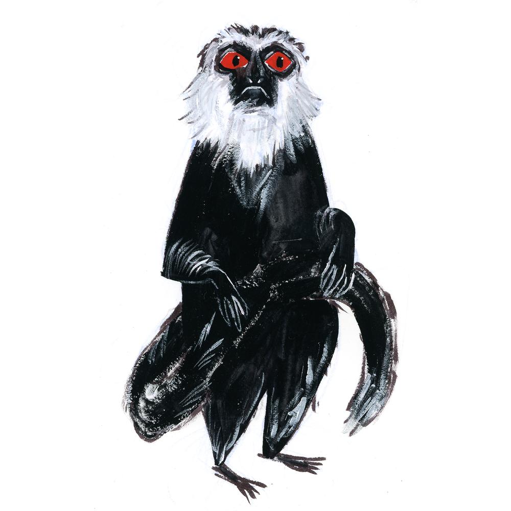 gk-monkey