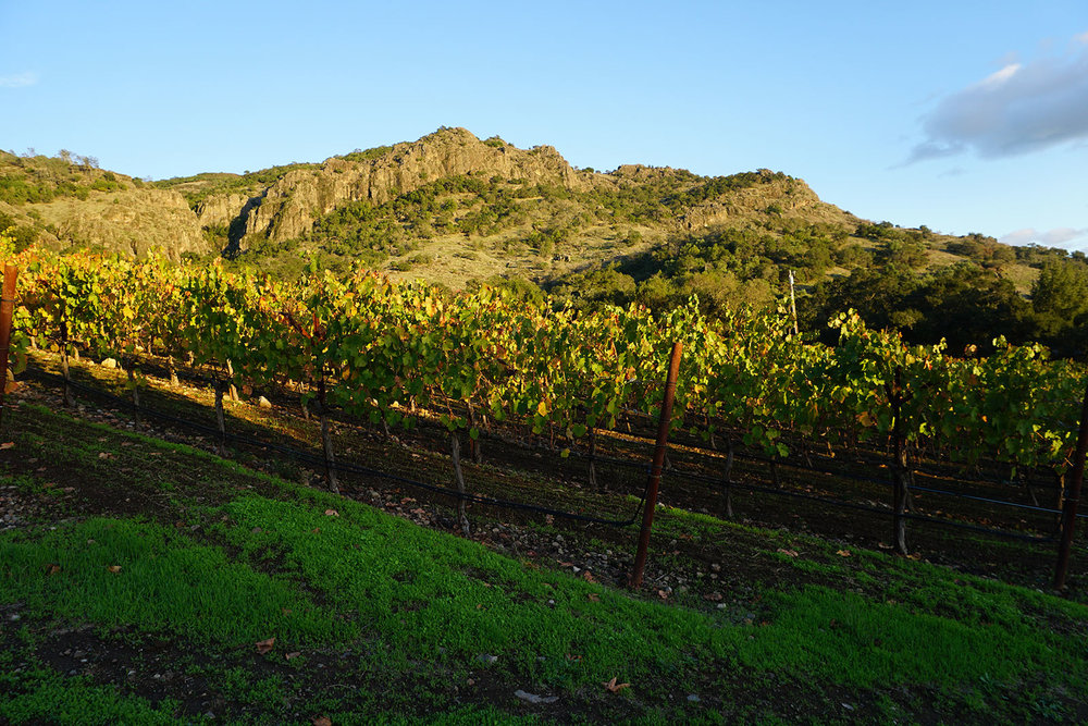 Palisades-Vineyard.jpg