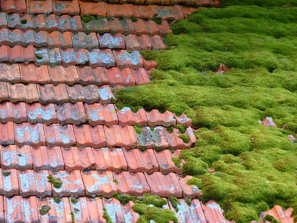 roof moss.jpg