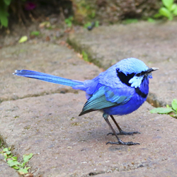 Blue Wren | You'll most likely spot a few of these little guys! Photo:  The Berry Farm