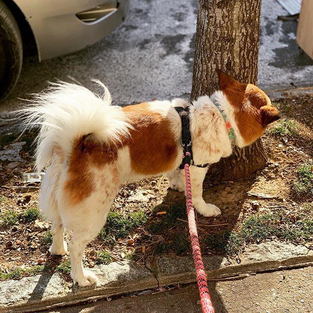 Marking territories. #PATC 🖤🐾 . . . #cats #dogs #furbaby #animallover #animalsofinstagram #animalrescue #grooming #boarding #petsitter #dogwalker #groomer #crowheights #brooklyn #bedstuy #petlovers #petshop #petstore #nostrand #groomersofinstagram  #petsittersofinstagram #dogwalkersofinstagram #animaltips #funnyjokes #animaljokes #lifestyle