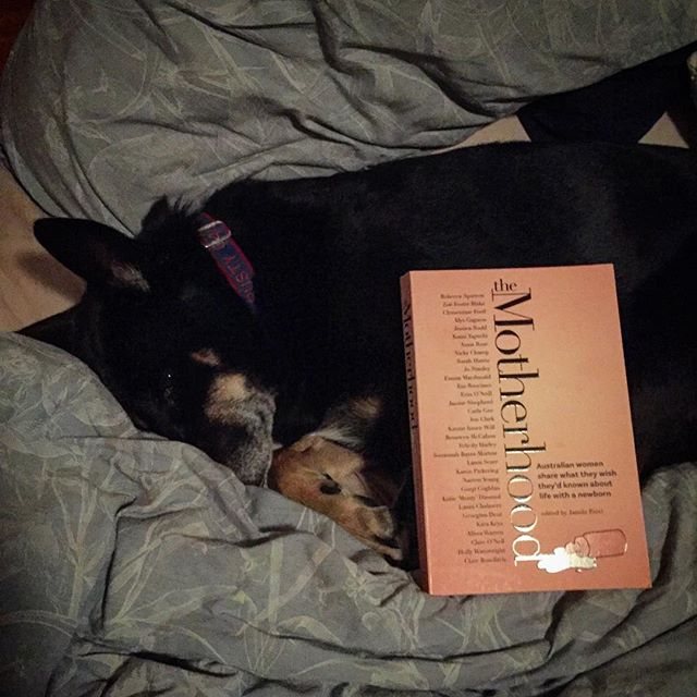 Trying to prep my fur baby by reading to her from #themotherhood book, letters from Australian women to themselves as new mums. I laughed and cried, but doggo remains in denial about upcoming changes in our pack 🤰🏽🐶📕❣️#pregnancybook #australianwomen #booksofinstagram #dogsofinstagram