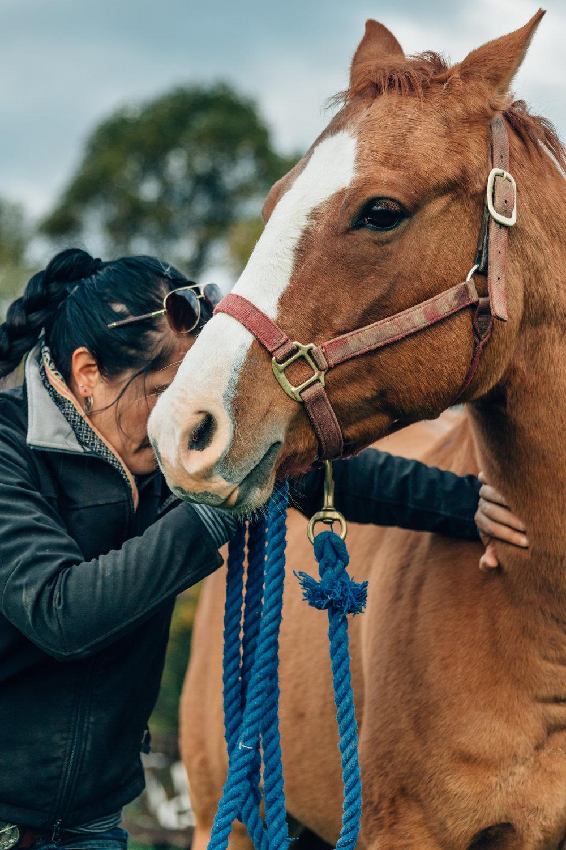 20161022_horseandshop-235.jpg