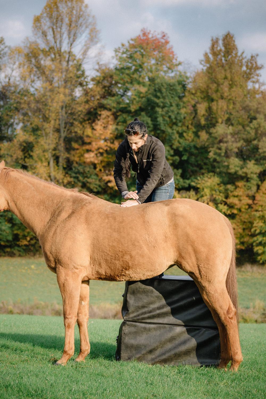 20161022_horseandshop-157-2.jpg