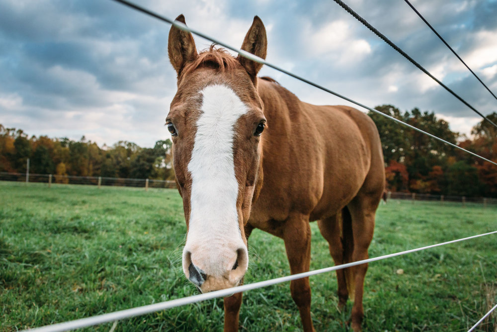 20161022_horseandshop-152.jpg