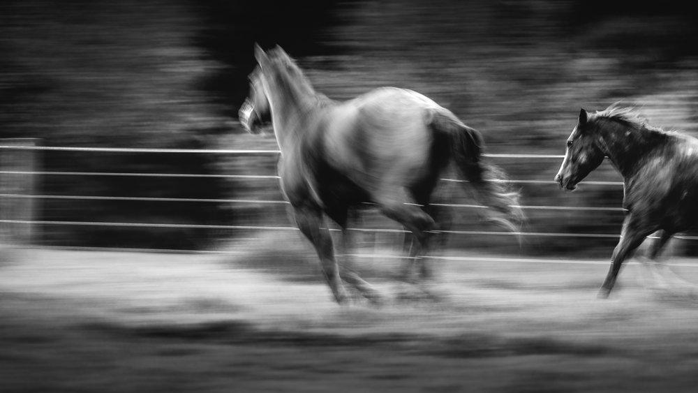 20161022_horseandshop-19.jpg