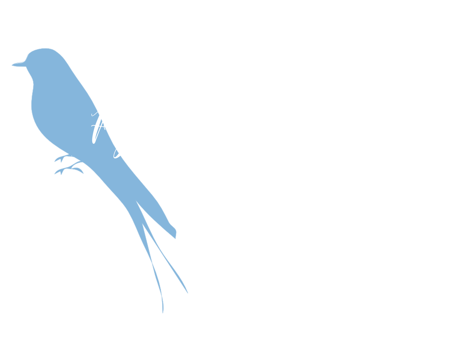 Flycatcher Photography