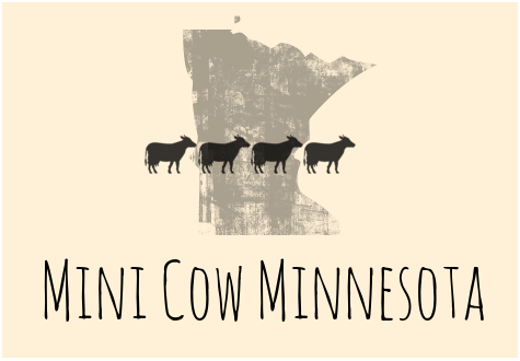 Mini Cow Minnesota