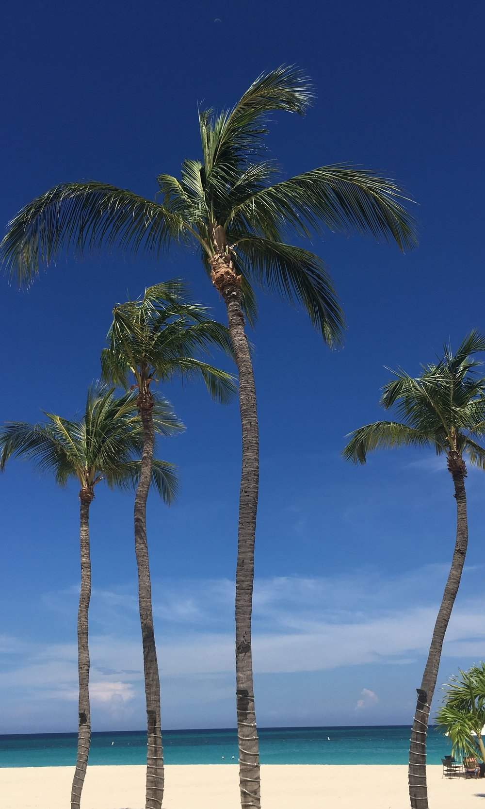 Wanderlust-blog-Aruba-resorts-beach-palm-tree
