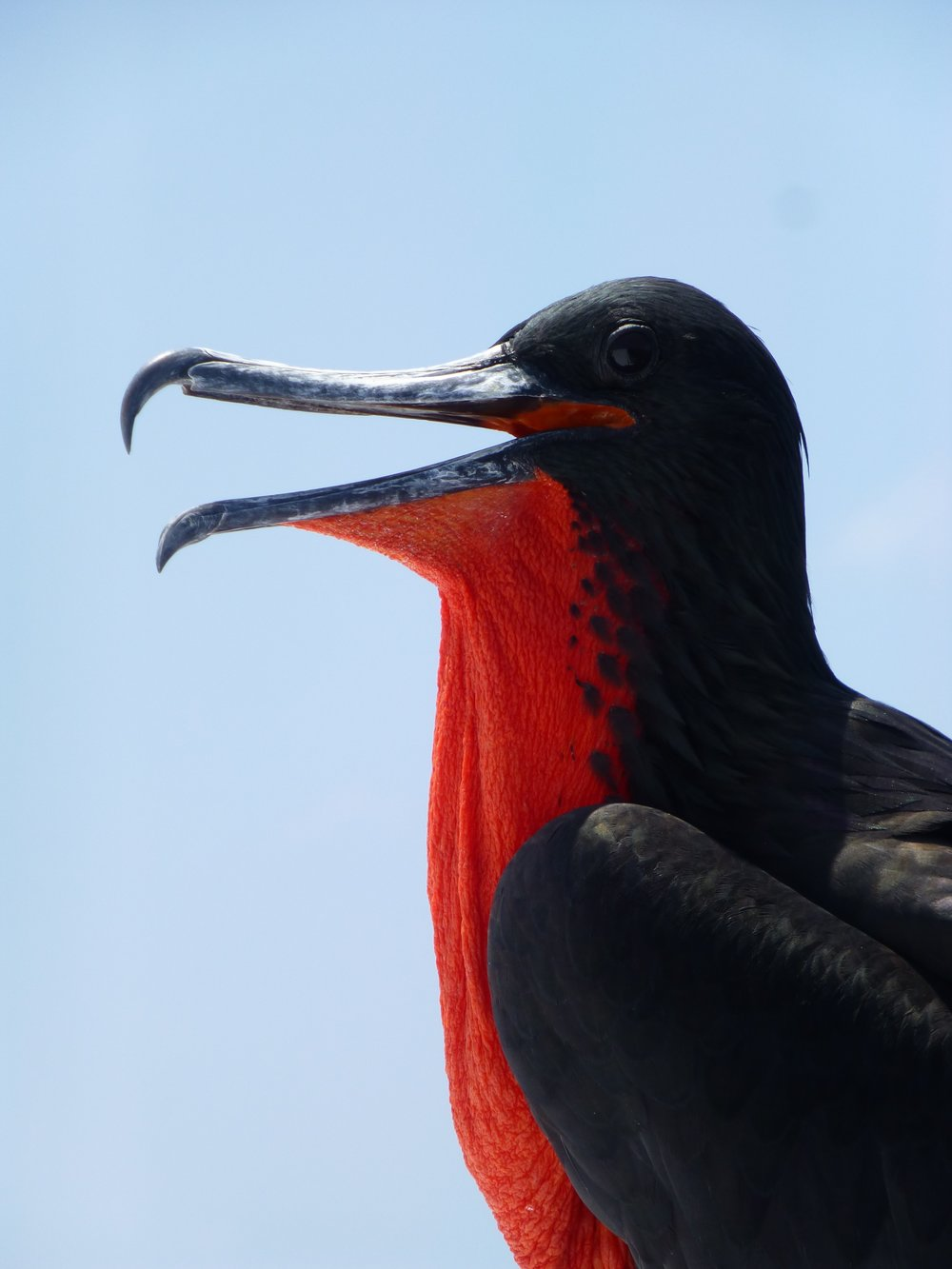 Wanderlust-travel-blog-Galapagos-islands-land-activities