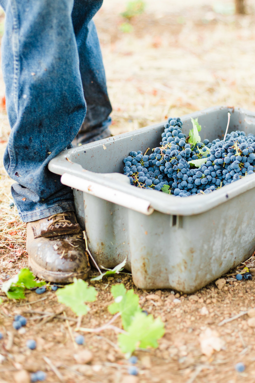 Silver Oak's Stagecoach Harvest - Sarah Anne Risk-13.JPG
