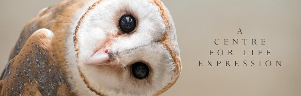 owl-q.png