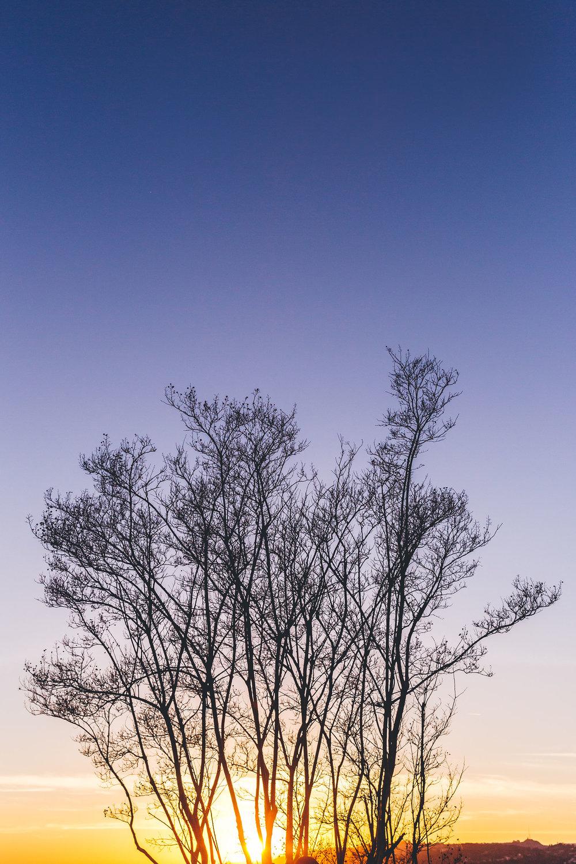 2017-GriffithPhotowalk-0008-sm.jpg